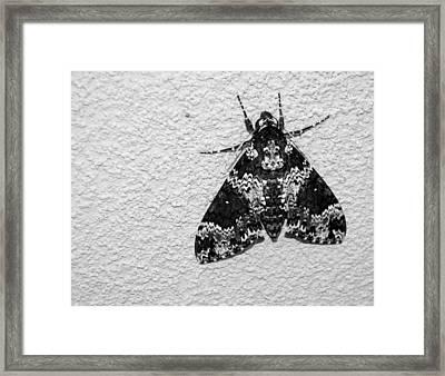Black And White Moth Framed Print
