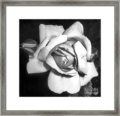 Black And White Rose Framed Print by Tina Ann Byers