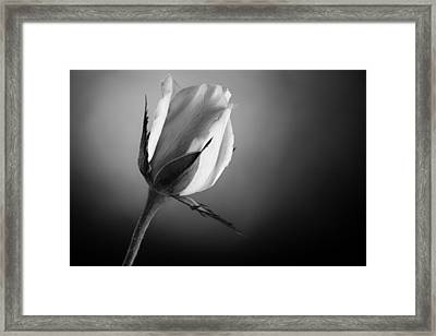 Black And White Soft Rose Framed Print by M K  Miller