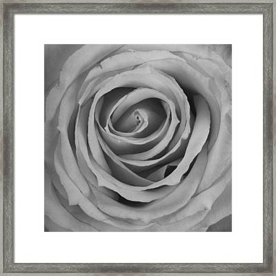 Black And White Spiral Rose Petals Framed Print by James BO  Insogna
