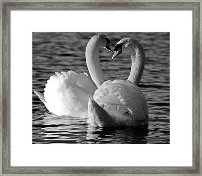 Black And White Swan Heart Framed Print by Geraint Rowland