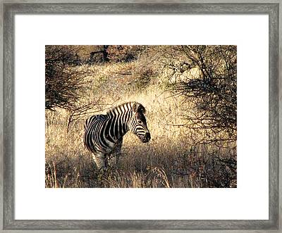 Framed Print featuring the photograph Black And White by William Fields