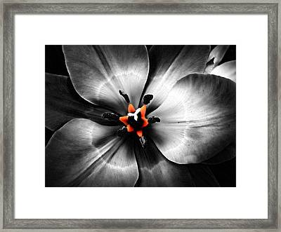 Black And White With A Glow Of Color Framed Print by Nick Kloepping