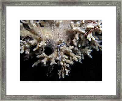 Black And White Worm On Leather Coral Framed Print by Ted Papoulas