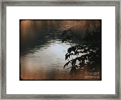 Black Bamboo Framed Print by Angela Wright