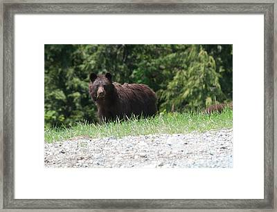 Black Bear Framed Print by Carol Ailles