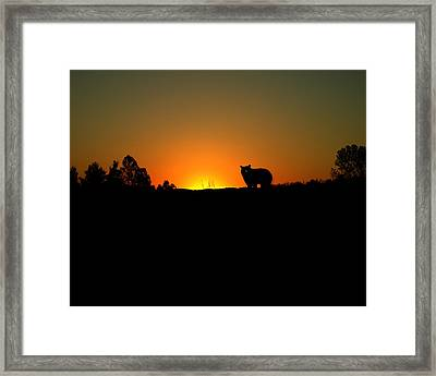 Black Bear Sunset Framed Print