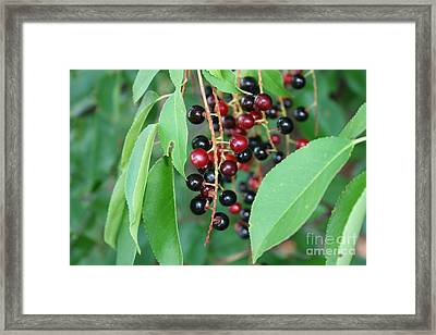 Framed Print featuring the photograph Black Beauty by Michael Waters