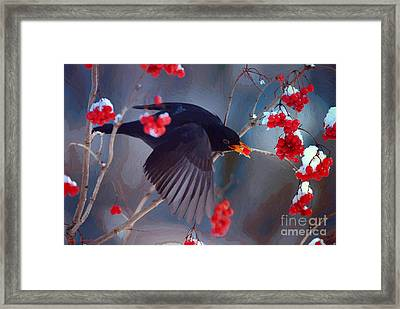 Black Bird In Flight Framed Print by Jerry L Barrett