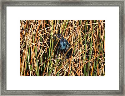 Framed Print featuring the photograph Black Bird by Jeanne Andrews