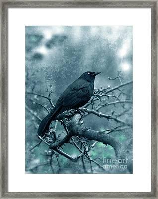Black Bird On Branch Framed Print by Jill Battaglia