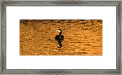 Black Bird On Surise Framed Print by Radoslav Nedelchev