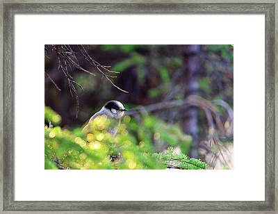 Black Capped Chicadee Framed Print by Rick Berk