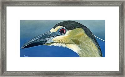 Black Capped Night Heron Framed Print by Jon Ferrentino