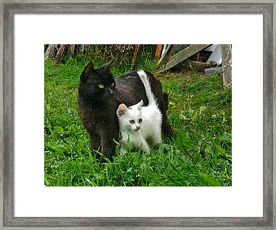 Black Cat Defends His White Kitten Framed Print