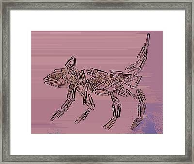 Black Cat Framed Print by Max Shkoropado