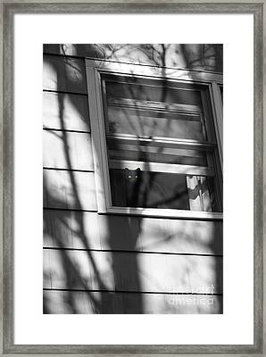 Black  Cat On A Shadowy Sill Framed Print