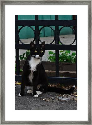 Black Cat On Black Background Framed Print