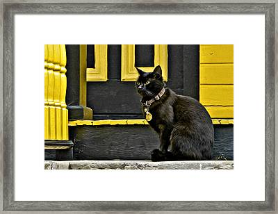 Black Cat Yellow Trim Framed Print