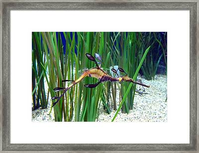 Black Dragon Seahorse Framed Print by Carla Parris