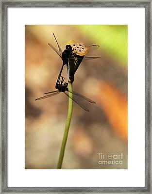 Black Dragonfly Love Framed Print by Sabrina L Ryan