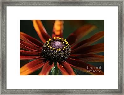 Black Eye Framed Print by David Taylor