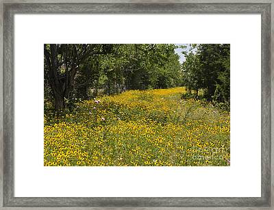 Framed Print featuring the photograph Black Eyed Susan by Cheryl McClure
