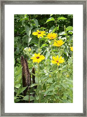 Black Eyed Susan I Framed Print by Mike Lytle