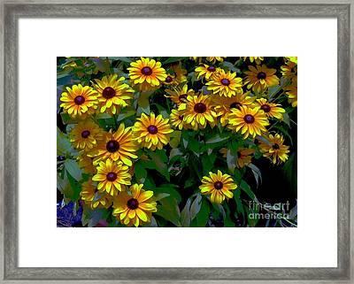 Black-eyed Susans Framed Print by Dale   Ford