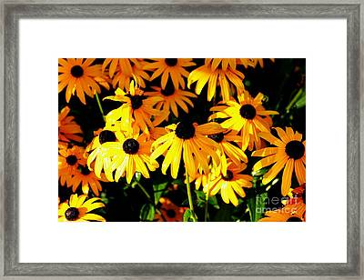 Black Eyed Susans Framed Print by Theresa Willingham