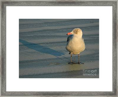 Framed Print featuring the photograph Black Feet by Everette McMahan jr