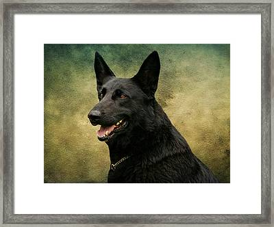 Black German Shepherd Dog IIi Framed Print