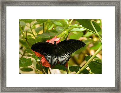 Black Is A Good Colour Framed Print by Peter Jenkins