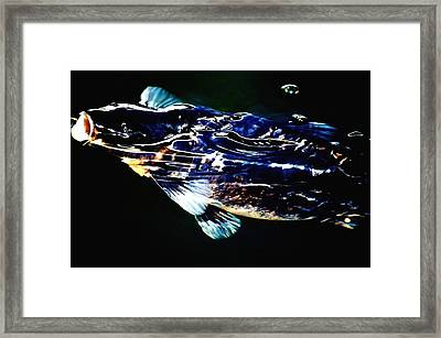 Black Koi Rising Framed Print