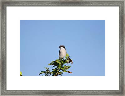 Framed Print featuring the photograph Black Mask Bird by Jeanne Andrews