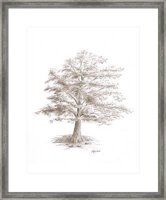 Black Oak Framed Print