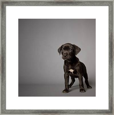 Black Puppy Framed Print