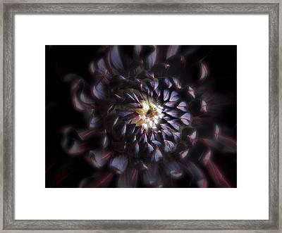 Black Purple Dahlia - Flower Photograph Framed Print by Artecco Fine Art Photography
