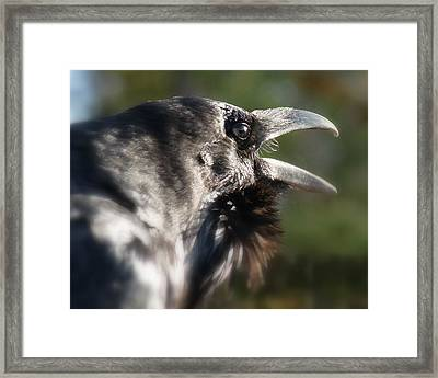 Framed Print featuring the photograph Black Raven Talk by Cindy Wright