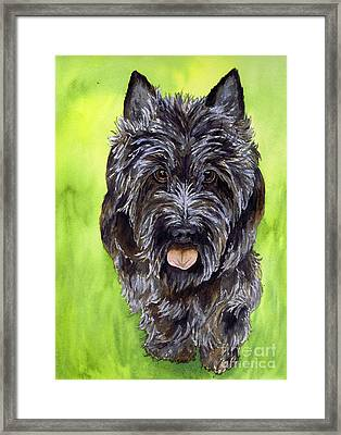 Black Scottish Terrier Framed Print by Cherilynn Wood