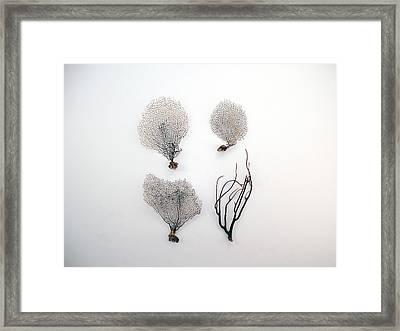 Black Sea Fans On White Background Framed Print by Jennifer Steen Booher