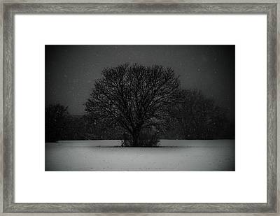 Black Snow Tree Framed Print by Sonja Quintero