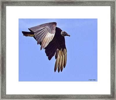 Black Vulture Framed Print by Roger Wedegis