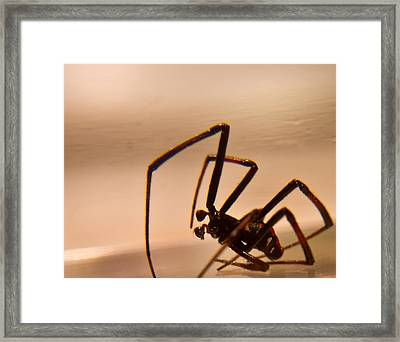 Black Widow Male Framed Print by Douglas Barnett