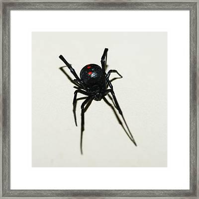 Black Widow Polka Dots Framed Print by David Waldo