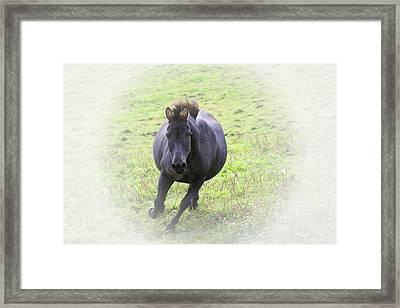 Black Zebra Framed Print by Karol Livote