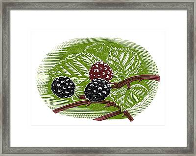 Blackberries, Woodcut Framed Print by Gary Hincks