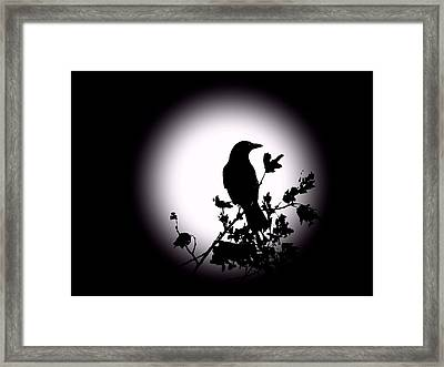 Blackbird In Silhouette  Framed Print by David Dehner