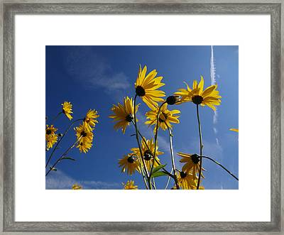 Blackeyed Susans Framed Print by Bruce Ritchie