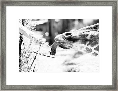 Blade Framed Print by Elizabeth Hart